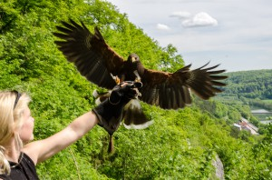Yvonne mit Harris Hawk Jammy
